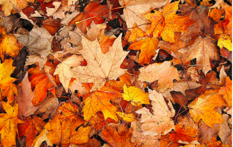 7 Fun Activities to do This Fall