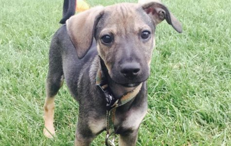 Puppy Of the Week