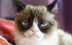Long Live Grumpy Cat