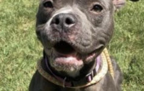 Adoptable Dog; Emily!