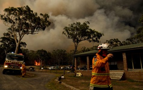 Please Help the Victims of Australia's Fires