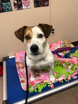 Adoptable Dog; Trixie!