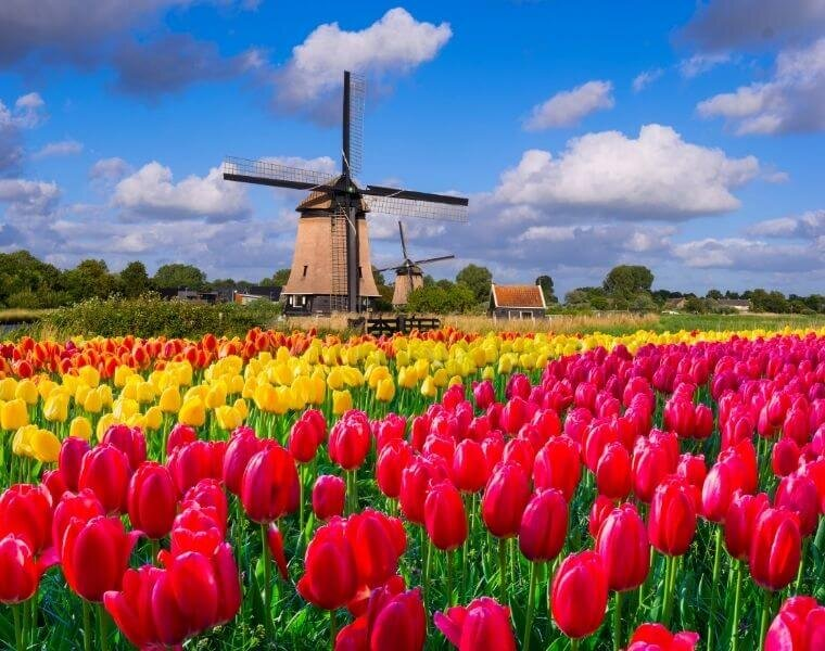 Tulip Time in Holland!
